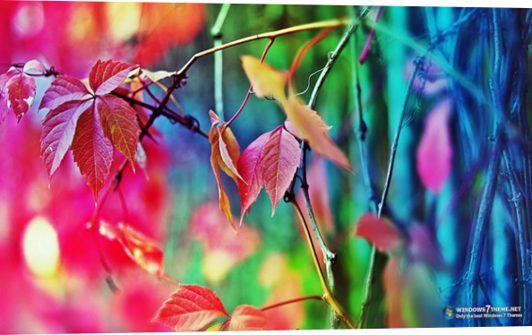 Colorful Leaves Windows 7 Theme